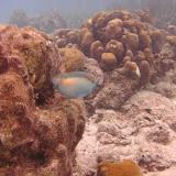 Bonaire 2011 - PICT0066.JPG