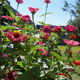 Gardening 2011 - 100_9124.JPG