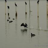 01-26-13 White Rock Lake - IMGP4288.JPG