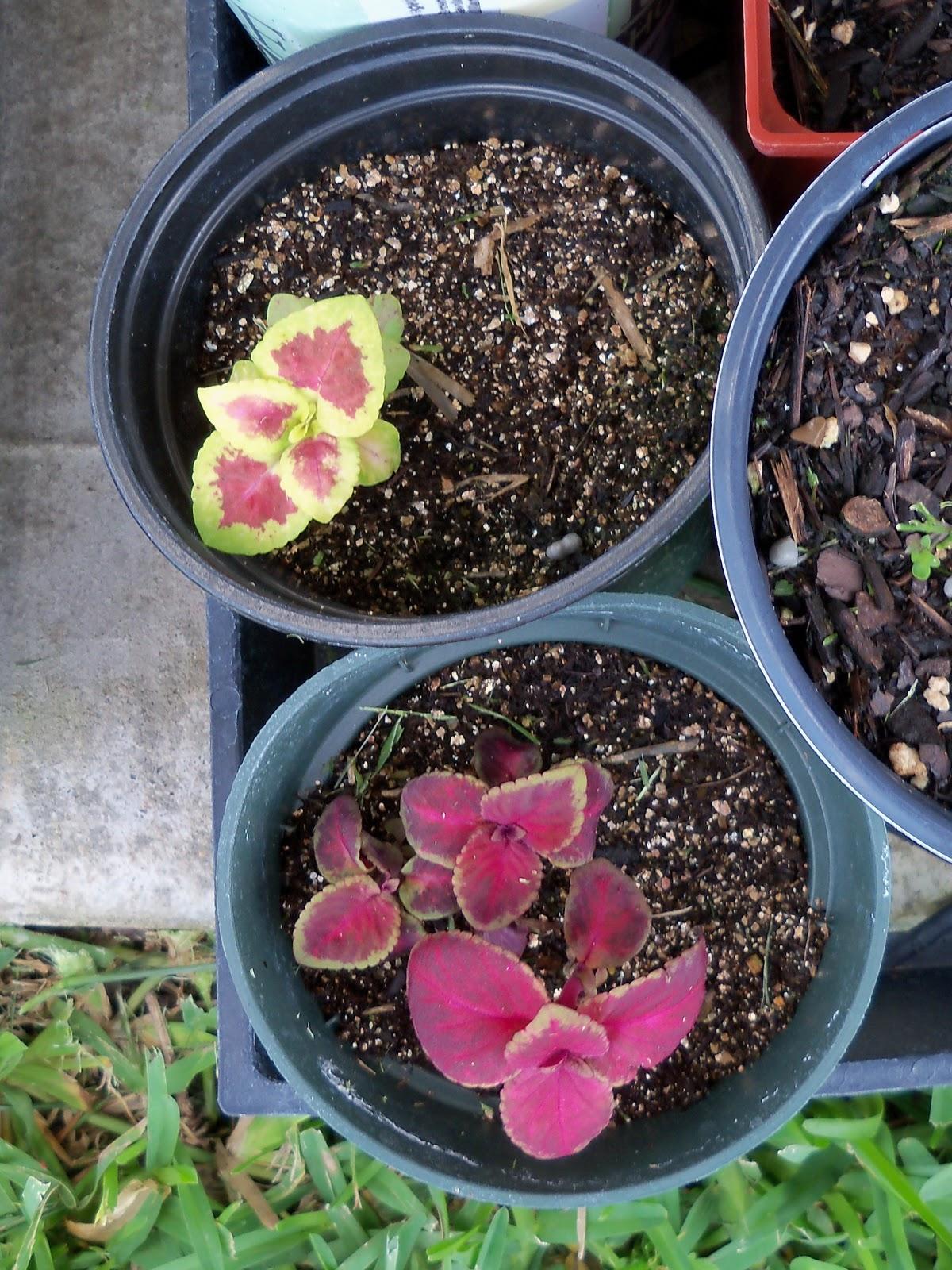 Gardening 2010, Part Two - 101_2533.JPG