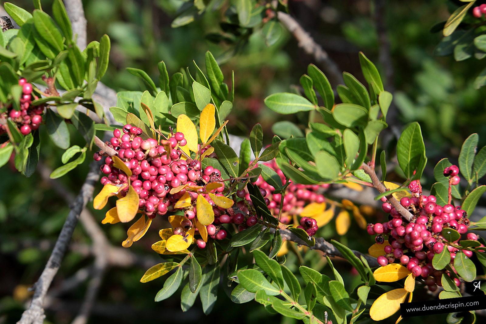 Plantas fucsias