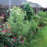 Gardening 2010, Part Three - 101_4689.JPG
