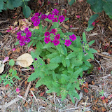 Gardening 2010, Part Two - 101_1919.JPG