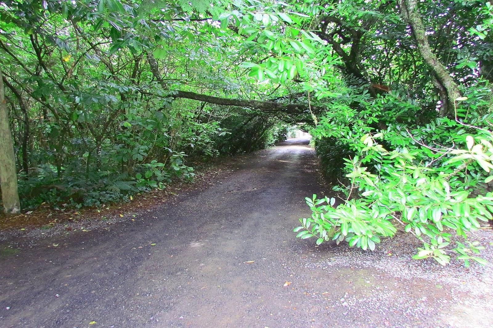 Larnarch Castle Tree Tunnel.jpg