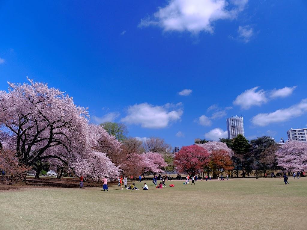 新宿御苑櫻花美景