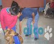 campaña esterilizacion VES 2008 (8)