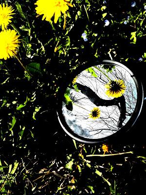 Primavera  di Robyvf