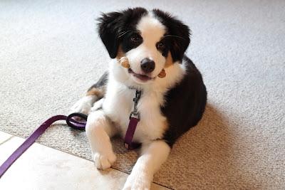 Lillie 3 Months