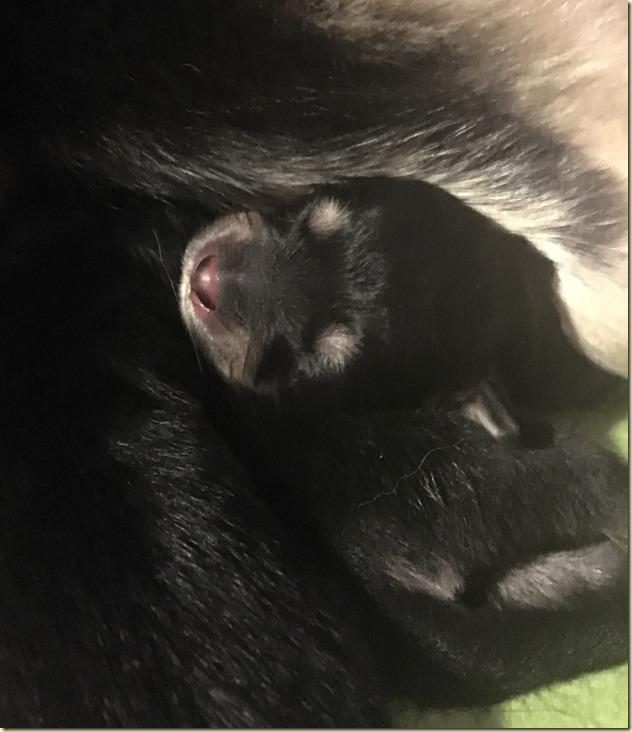 180416 liten nyfødt