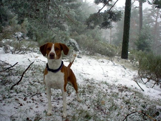 2000 · Navacerrada, flipando con la nieve