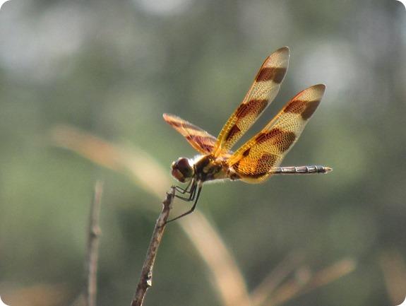 4 Halloween Pendant Dragonfly