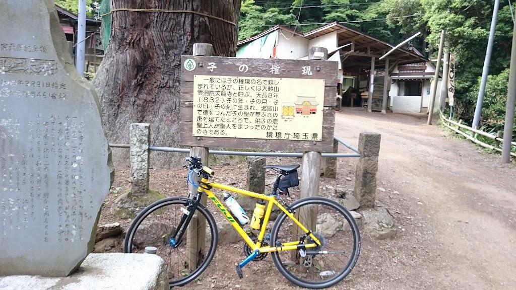 子ノ権現の杉の木にてフジ パレットの写真
