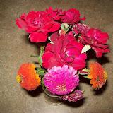 Gardening 2009 - 101_5264.JPG