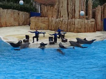 2018.08.09-030 spectacle de dauphins (15h23)