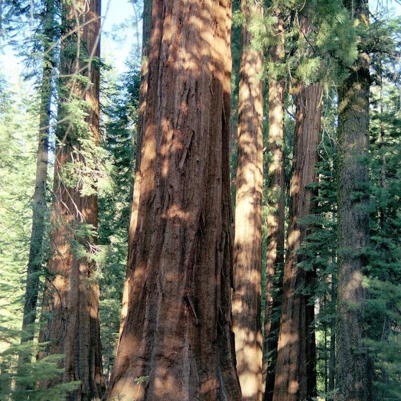 Yosemite_36.jpg