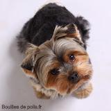 Bouilles de Poils - photos Studio - 2010-12-02%2Bbacchus%2B150.JPG