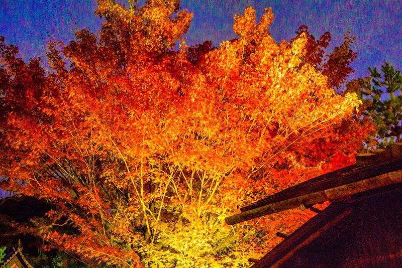 京都 高台寺 紅葉 ライトアップ 写真2