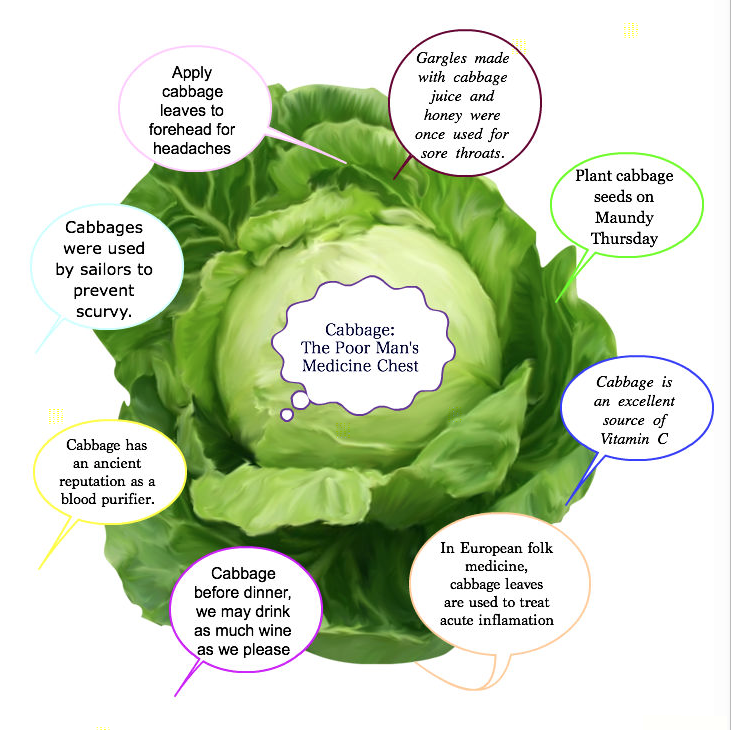 Cabbage Graphic