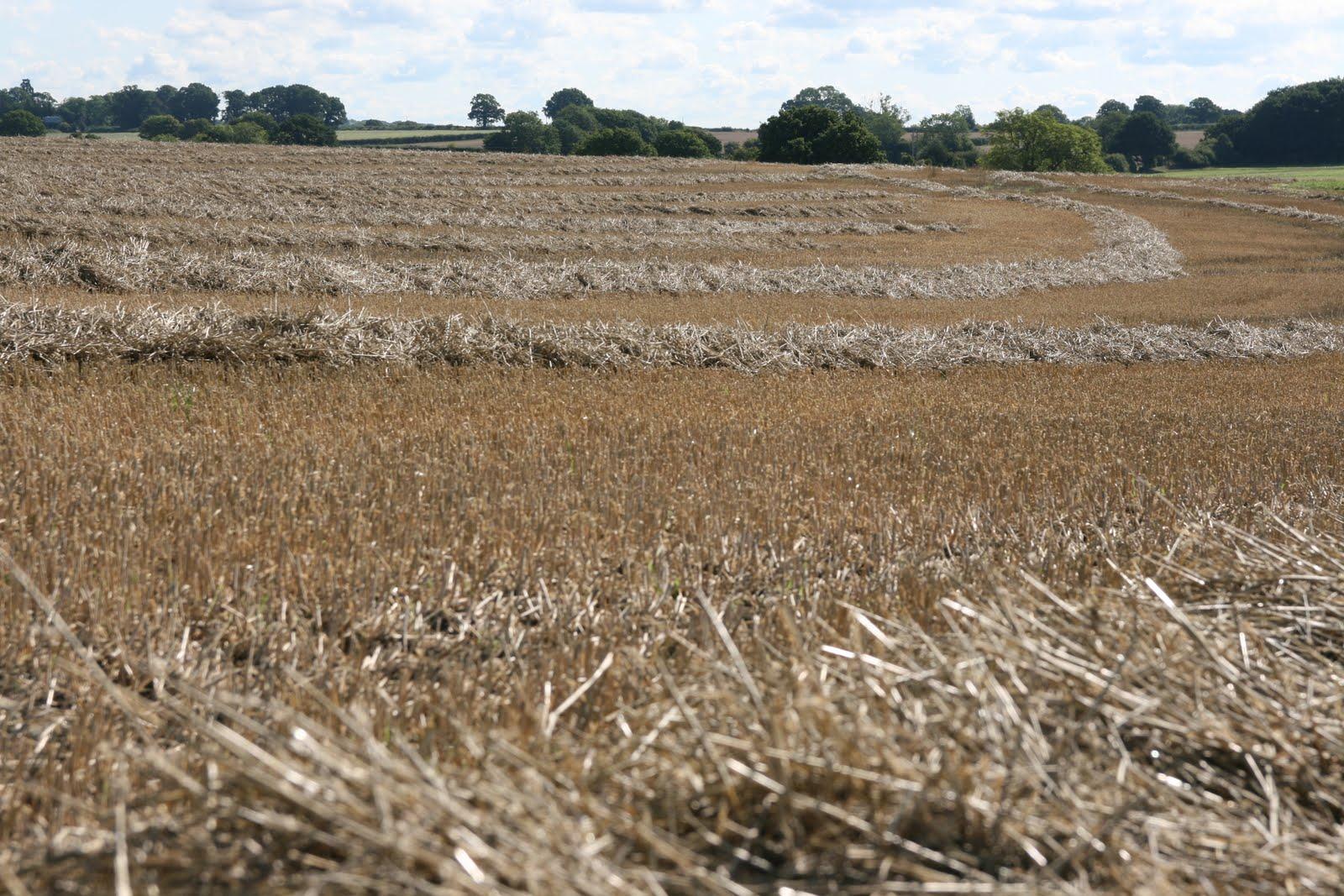 1008 069 Alton Circular, Hampshire, England After the harvest