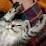 Kenny Massicotte's profile photo