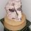 E.V. REEVES's profile photo