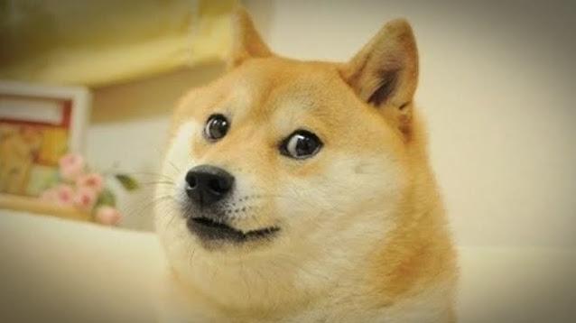meme doge anjing anjay