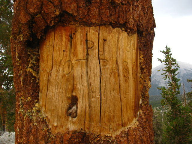Guyot Pass carved tree sign