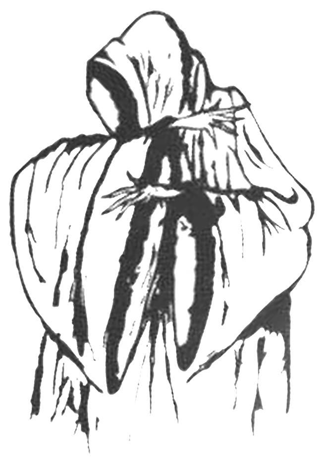 primera-criatura de-iron-maiden