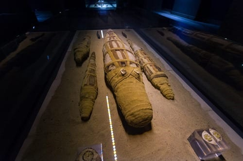 Crocodile mummy museum Egypt