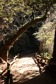 Path in Muir Woods