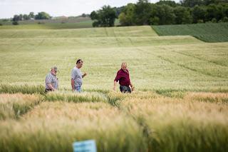 Three farmers walk the field of small grains.