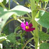 Gardening 2009 - 101_5184.JPG