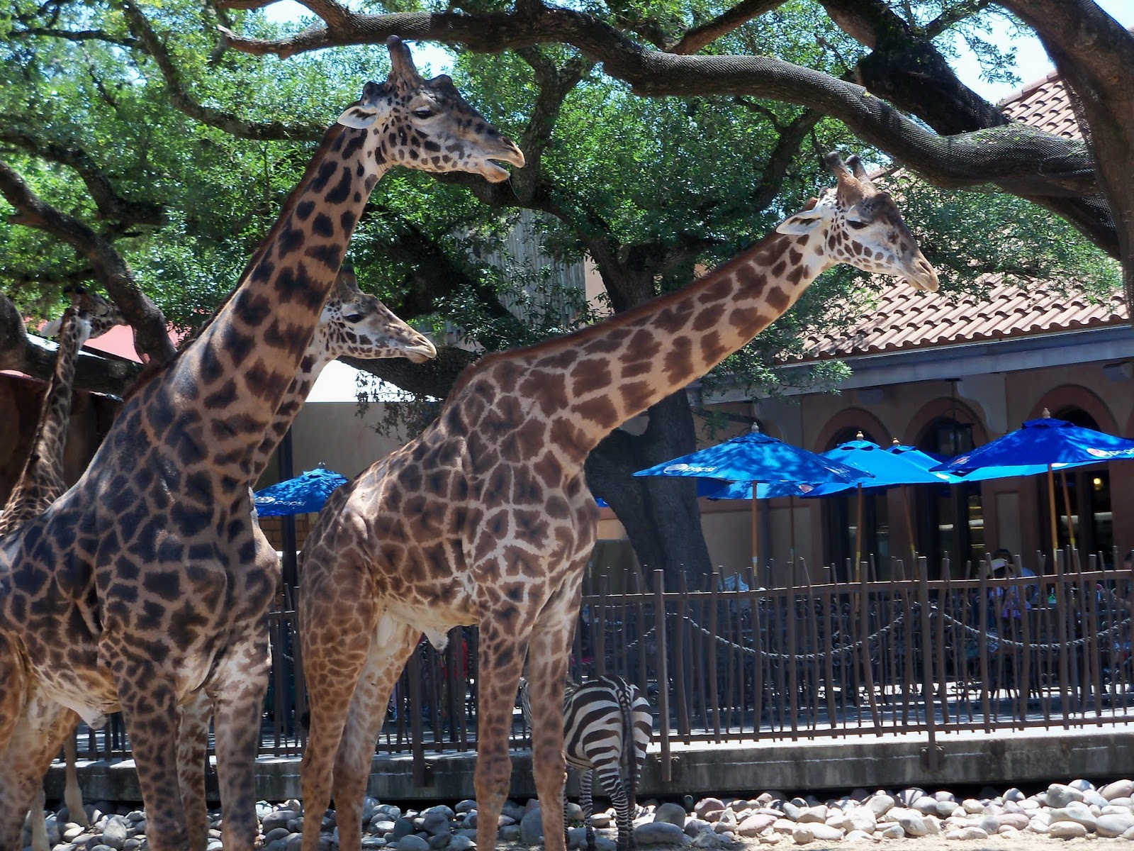 Houston Zoo - 116_8551.JPG