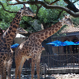 Houston Zoo - 116_8551.JPG