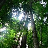 Dans la forêt près de Saül (Guyane). 1er décembre 2011. Photo : P. Fonteyne