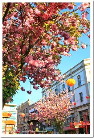 160410_Victoria_Chinatown_0021
