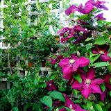 Plants for SUN