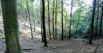 Wald, Wald, Wald, ...