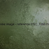 DSC_1698.thumb.jpg