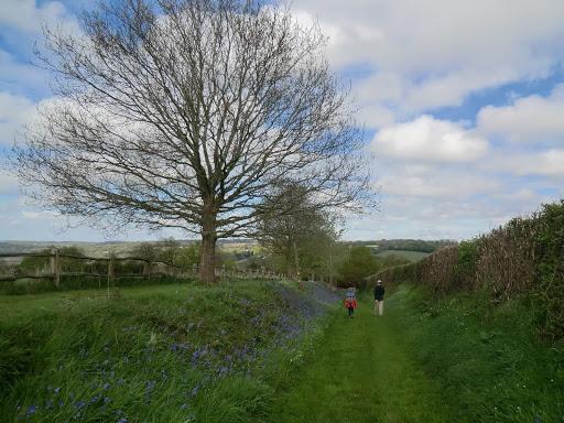 CIMG6400 Towards Lodgefield Farm (spring)