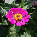 Gardening 2013 - IMG_20130526_103354.jpg