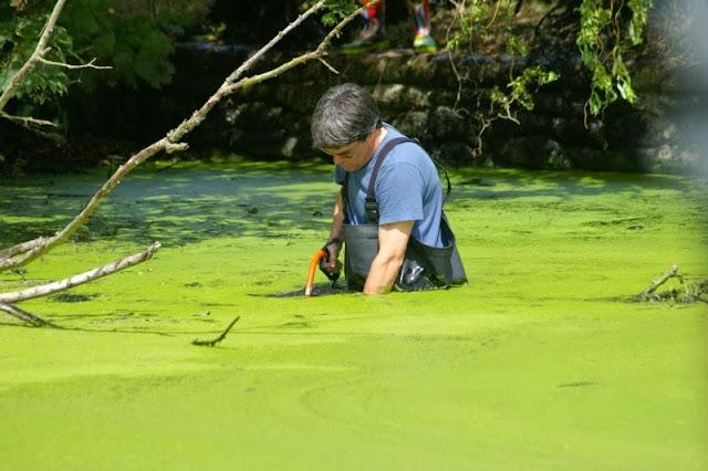 Pond Clearance - 17-07-2010 - pondamonium%2B%252816%2529.jpg