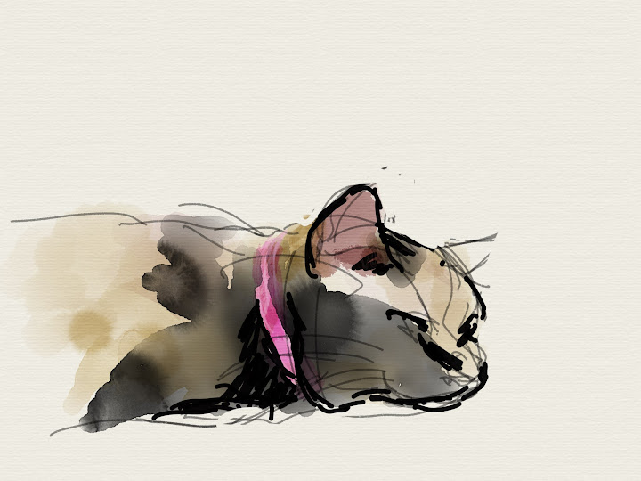 Neko made with Sketches