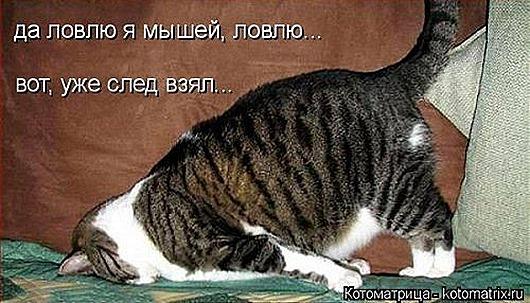 1419612351_kotomatricy-23