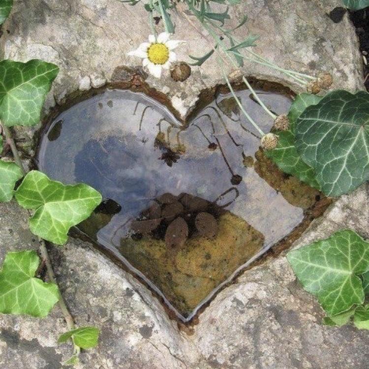 Eu vejo coração em todas as coisas que olho...