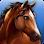HorseHotel - Care for horses