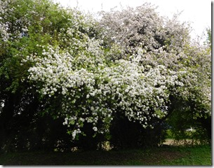 4 lovely blossom below buckby locks