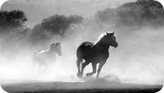 LI - Wild Horse coming out of the fog (my move to iphone from windows phone)