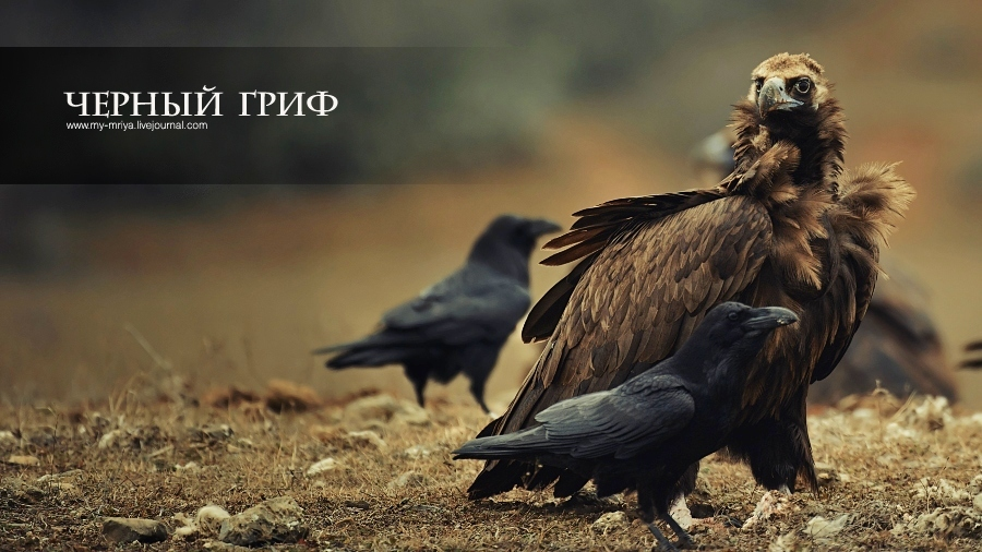 wildlife.crimea.ua