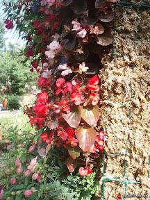 salon exposition pépiniére derbez murs végétaux 2006-07